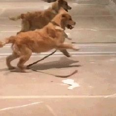 Lol I thought it was two dogs running at one mirror and then realized what was…