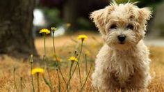 Image detail for -Description: Free Download Cute Puppy Wallpaper | Cute Puppy Hi ...