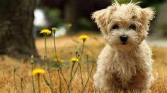 So adorable! ::doggie::