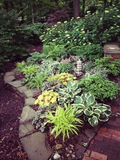 Some of my shade garden's reliable residents include: lariope, hosta, heuchera, japanese painted fern, astilbe, lungwort, ostrich fern, hydrangea, yew, viburnum, japanese maple.