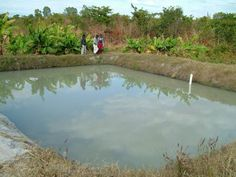 How To Build And Manage A Fish Pond Before discussing about pond management we have to know what is a pond? Generally a pond means a small collection of still water