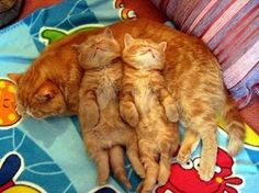 .Moms Make the Best Pillows | kittens.