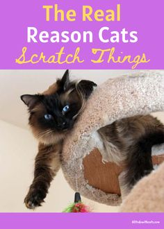 Cat Behavior Problems, Cat Water Fountain, The Ugly Truth, Bad Cats, Protecting Your Home, Scratching Post, Cat Health, Buy A Cat, How To Train Your