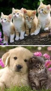 Kitten And Puppy Wallpapers High Quality Resolution Animals Kittens And Puppies, Cute Puppies, Cute Dogs, Cute Dog Wallpaper, 3d Wallpaper, Dog Breeders Near Me, Puppy Care, Hd Images, Dog Owners