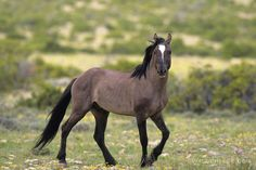 Wild Horse Photography by Buck Wilde