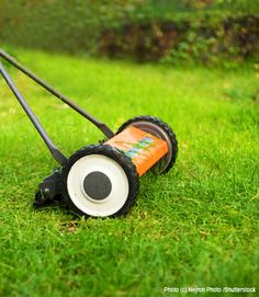 10 Steps to Pesticide-Free Lawn Care - Gardening in Natural Life Magazine