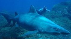 We ask that Canary is a sanctuary of sharks and rays.