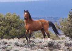 Pete Ramey discusses wild horse hoof and health observations