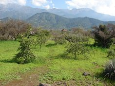 Sendero.Isla Punhuapi