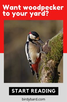 This is a complete and comprehensive guide that you have to know before choosing the best bird feeders among all different types. Unique Bird Feeders, Best Bird Feeders, Woodpecker Feeder, Why Do Birds, Woodpeckers, Pet Feeder, Woodworking, Backyard, Pets