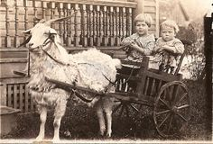 Lots of fun for two small children in a goat cart with a shaggy friend... (vintage, old wood, history)