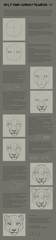 This shows how to basically construct a snow leopard head from a frontal perspective.