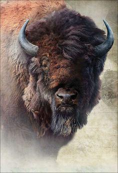 Buffalo Animal, Buffalo Art, American Bison, American Animals, Nature Animals, Animals And Pets, Animals With Horns, Animal Bufalo, Wildlife Photography