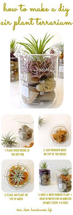 How to Make a DIY Air Plant Terrarium - Dear Handmade LIfe