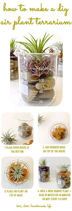 This would be cool for my desk. How to Make a DIY Air Plant Terrarium - Dear Handmade LIfe