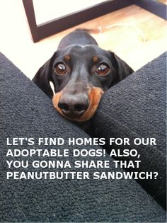 Adoptable Fridays needs submissions!