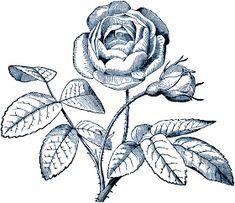 **FREE ViNTaGE DiGiTaL STaMPS**: Free Digital Stamp - Rose Flower Image Digital Stamps Free, Free Digital Scrapbooking, Digital Scrapbook Paper, Flower Images Free, Colorful Drawings, Flower Drawings, Pencil Drawings, Templates Printable Free, Free Printables