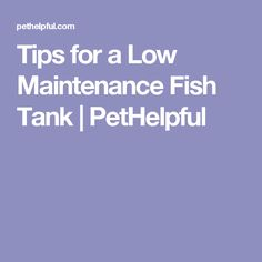 Tips for a Low Maintenance Fish Tank | PetHelpful