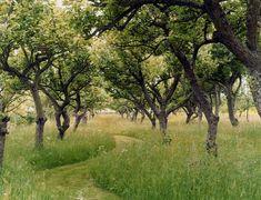 Landscape Architecture, Landscape Design, Garden Design, Meadow Garden, Dream Garden, Garden Paths, Garden Landscaping, Orchard Design, Wild Flower Meadow