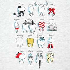 Dental Definitions Are you looking for a dental assisting study guide? www.DentalAssistantStudy.com
