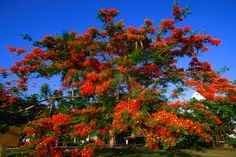 Puerto Rico Plants and Trees | Puerto Rico's eco-parks - Lonely Planet