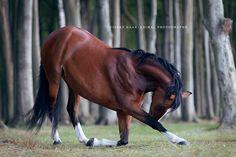 Das neue Jahr startet für mich mit einer weiteren, großen Publikation: Faszination Pferdefotografie ist endlich fertig und steht im Laden für interessierte Leser bereit. Ein Jahr habe ich an dem Buch für fortgeschrittene Fotografen und Pferdefreunde gearbeitet. Es ist ein schönes Gefühl, das Ergebnis eines so aufwendigen Projektesin den Händen halten zu können. Kein Buch …
