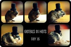 Gerbils in Hats (day… | juliepersons on Xanga