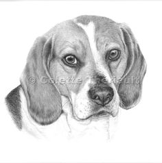 Pencil Drawings Of Dogs Beagle, Pencil Drawings, Dog Drawings, Pet Portraits, Art Sketches, Pet Dogs, Illustrators, Artsy, Painting