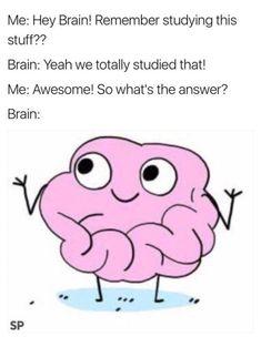 Stupid Funny Memes, Funny Relatable Memes, Haha Funny, Funny Posts, Funny Cute, Hilarious, Funny Stuff, Lol, School Memes