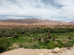 Hight Atlas - valley with date palms