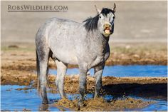 Smiling Wild Horse, Brown Horses, Horse Photography, Rob's Wildlife, Gifts for Horse Lovers, Horse Wall Art Home Decor by RobsWildlife on Etsy https://www.etsy.com/listing/228797347/smiling-wild-horse-brown-horses-horse