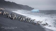 Deception Island - Antartica