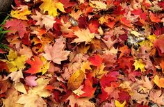 500px / Fall by George Bloise