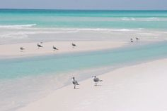 #NavarreBeach, FL - Yes the water really looks like this... http://www.easttennesseewildflowers.com/gallery/index.php/Seashores/Copy_of_Gulls_Navarre_Beach1&utm_content=buffera6405&utm_medium=social&utm_source=twitter.com&utm_campaign=buffer?utm_content=bufferd1a61&utm_medium=social&utm_source=pinterest.com&utm_campaign=buffer
