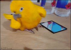 흥겨운 앵무새.gif | 유머 게시판 | 루리웹 모바일