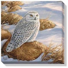 Art | Wrapped Canvas Art Snowy Owl by Millette by Rosemary Millette