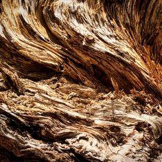 The side of a fallen tree. #natureart #artinnature