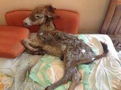 Un burro que había sido abandonado para morir encuentra cariño en un diminuto amigo Beautiful Dogs, Animals Beautiful, Cute Animals, Hamsters, Pokemon Go, Cute Puppies, Cute Dogs, Goats, Dog Cat