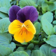 Les 288 Meilleures Images Du Tableau Fleurs Sur Pinterest Plants