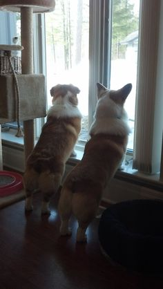 Father/Son Moment: Watching birds, chipees and squirrels. Coby... - OCD: Obsessive Corgi Disorder