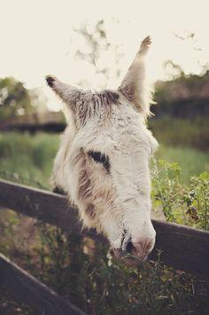 Beautiful donkey!