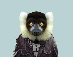 Ruffed Lemur (Varecia Variegata)