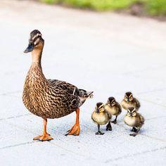Neuer Ratgeber: Warum Eltern führen müssen - 7 Botschaften von Jesper Juul