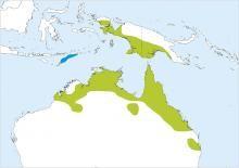 Green Pygmy Goose Nettapus pulchellus - Google Search