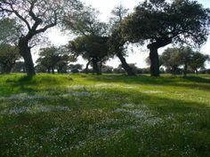 Magnífico aspecto de la dehesa extremeña en un paraje del Parque Periurbano de Moheda Alta.