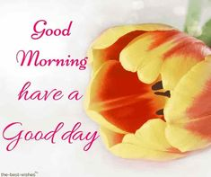 Looking for best Good Morning Wishes and Images with Rose? Check out our collection of beautiful HD Images, Pictures and Pics to send to your loved ones and spread a smile on their faces. Good Morning Beautiful Gif, Good Morning Roses, Good Morning Msg, Good Morning Thursday, Happy Morning, Good Morning Messages, Good Morning Greetings, Morning Wish, Morning Quotes