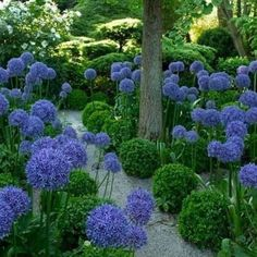 [New] The 10 Best Garden Ideas Today (with Pictures) - luscious and mysterious or simple and elegant? Something else? Anyway this garden is amazing! repost from Agapanthus, Allium, Shade Garden, Garden Plants, Finding Neverland, Something Else, Garden Gates, Amazing Gardens, Beautiful Gardens