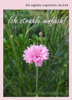 Die tägliche Inspiration No.288  www.inspirationenblog.wordpress.com  www.ulrikebischof.de