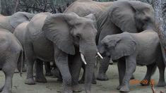 Amakshosi Safari Lodge in Pongola, for weddings, honeymoons, proposals or a romantic weekend away Romantic Weekends Away, Outside Showers, Lodge Wedding, Big 5, Game Reserve, Hammocks, Lodges, Chocolate Fondue, Safari