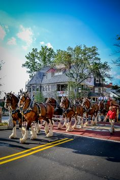 Clydesdales at N.C. James Plaza Building